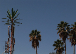 Cellular Antenna Palm Tree